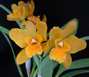 Orchid Island Botanicals Vero Beach Fl