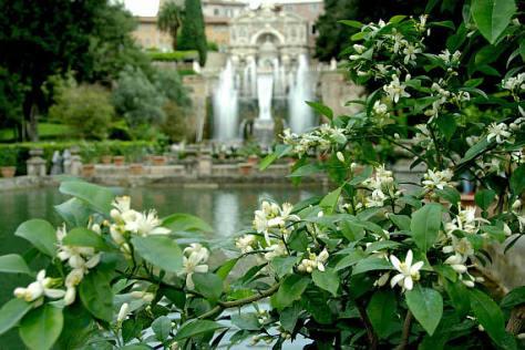 From the gardens of the Villa d'Este at Tivoli