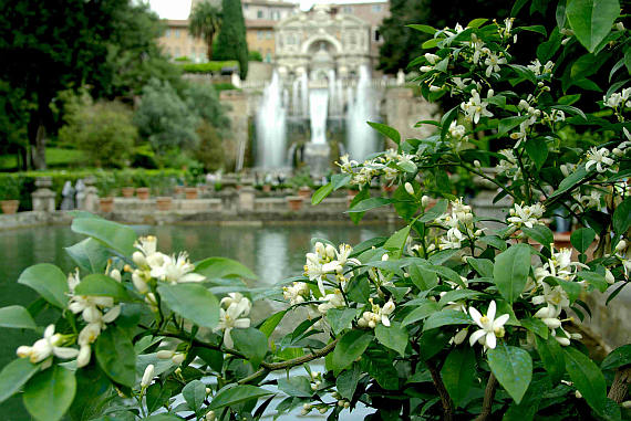 From the gardens of the Villa d'Este at Tivoli