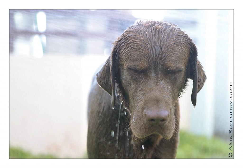 16-Wet-dog-Alex-Romanov-1024x708