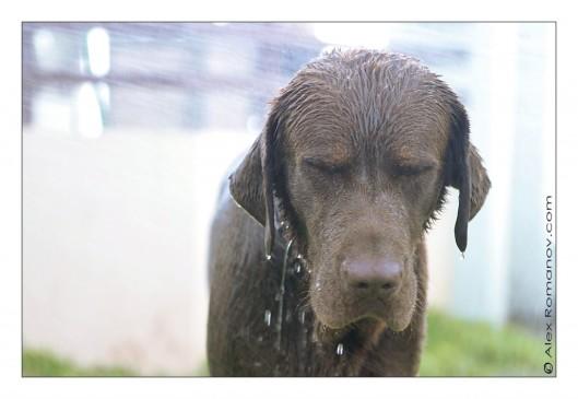 Pedigree Wet Dog Food Ingredients