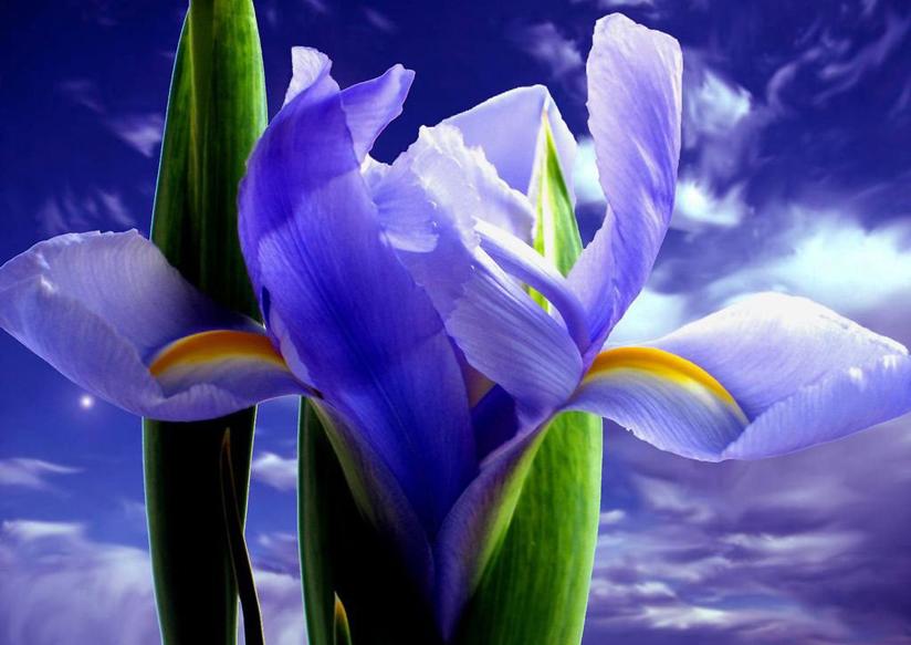 giardino-degli-iris1
