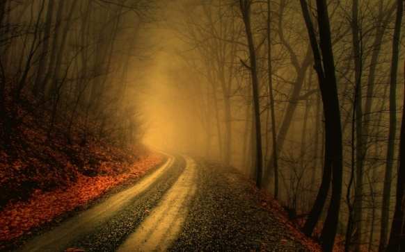 trees autumn forest path fog mist roads 2560x1600 wallpaper_www.wallpaperto.com_2