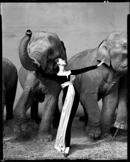Dovima with elephants, by Richard Avedon, 1955. Her dress was designed by a very young assistant to Monsieur Dior named Yves Saint Laurent